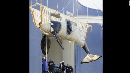 131008181308-08-captive-whales-1008-horizontal-large-gallery.jpg